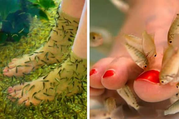 Aquatic life llc cdc warns against fish pedicures for Fish eating pedicure