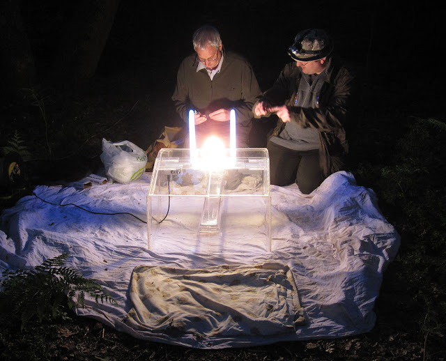 Kent Butterfly Conservation mothing event at Oldbury Hill, 10 June 2012.