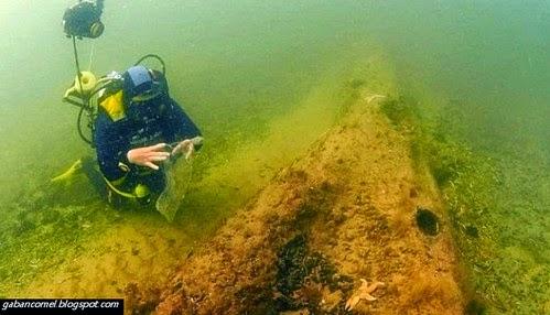 Misteri Kewujudan Hutan Kuno Berusia 10000 Tahun di Dasar Laut