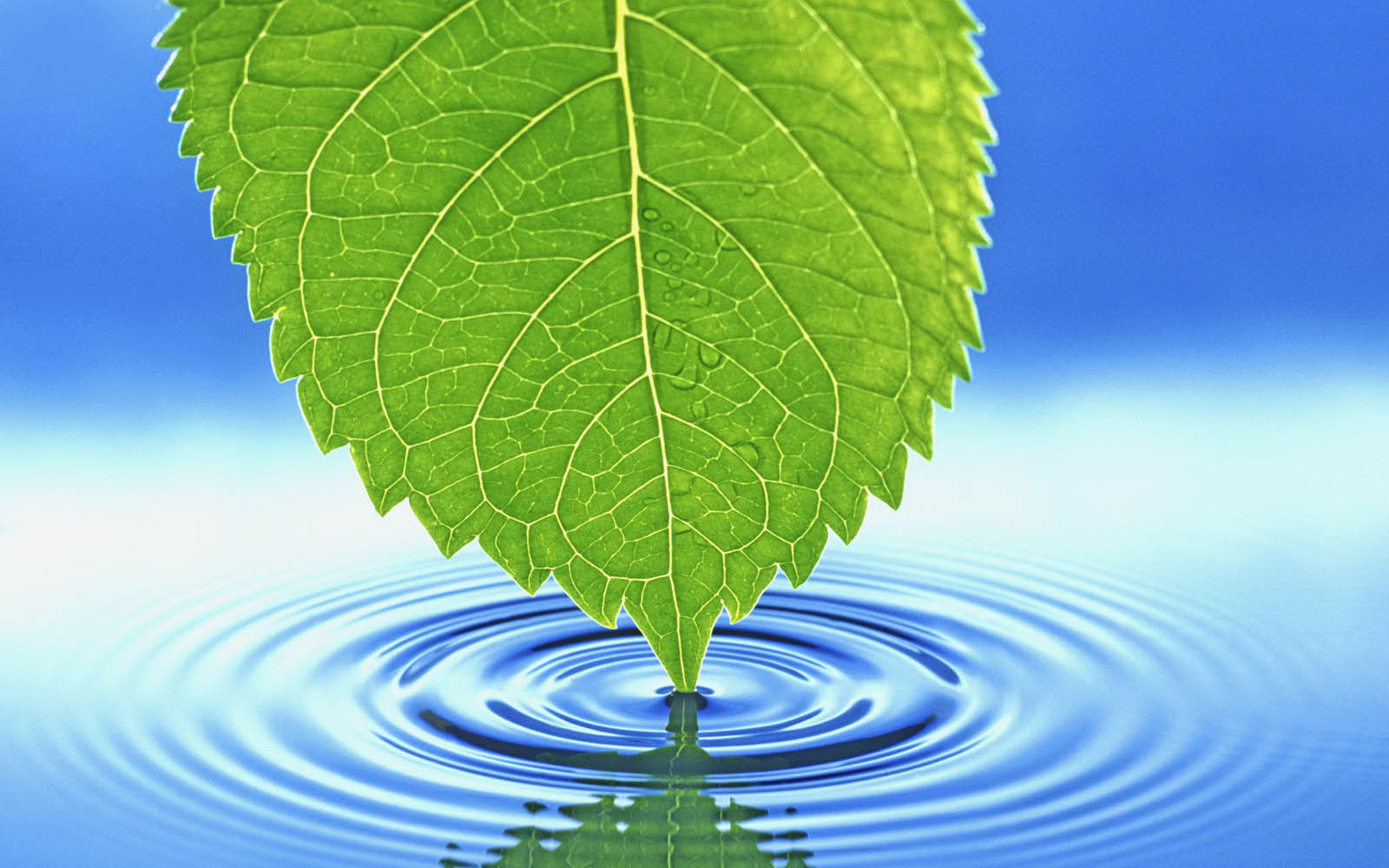 green leaf wallpaper image - photo #19