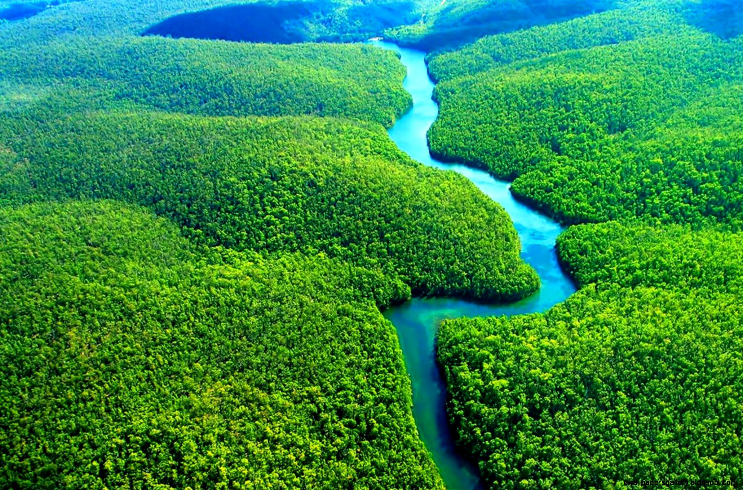 Amazon Rainforest Wallpaper HD Download For Desktop