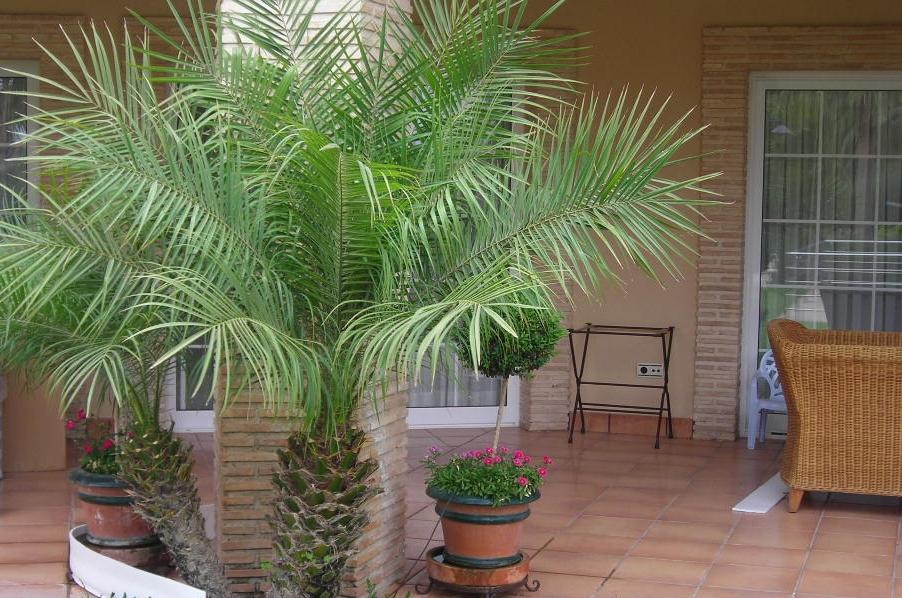 crea tu jard n las plantas en la terraza cuidados b sicos i