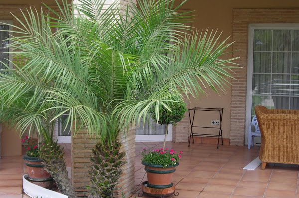 Plantas terraza cuidar de tus plantas es - Plantas terraza ...