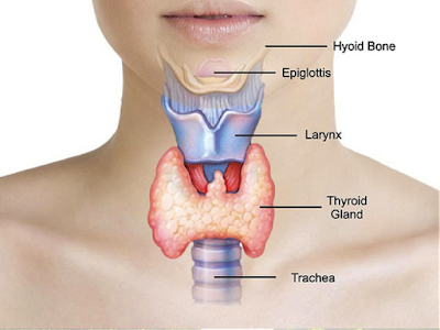 How to treat the thyroid in a natural way pulse decreases ,Exercise, Unexplained weight gain.,Dry skin Cholesterol,Joint problems, Hair loss, Symptoms of hypothyroidism