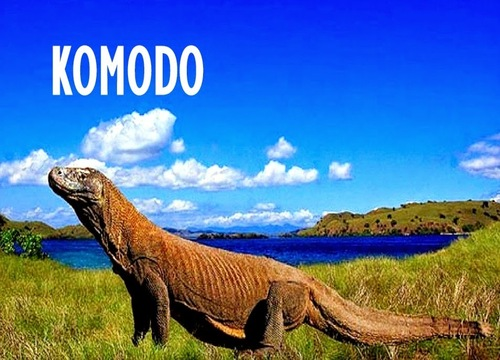 New7Wonders - Komodo