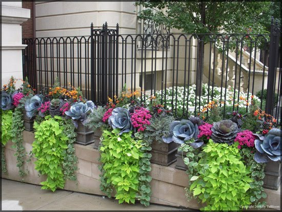 the beauty of flower boxes B B