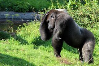 4 days Rwanda and Uganda Gorilla Tracking safari