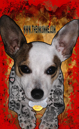 Jordan, the tattooed Chihuahua