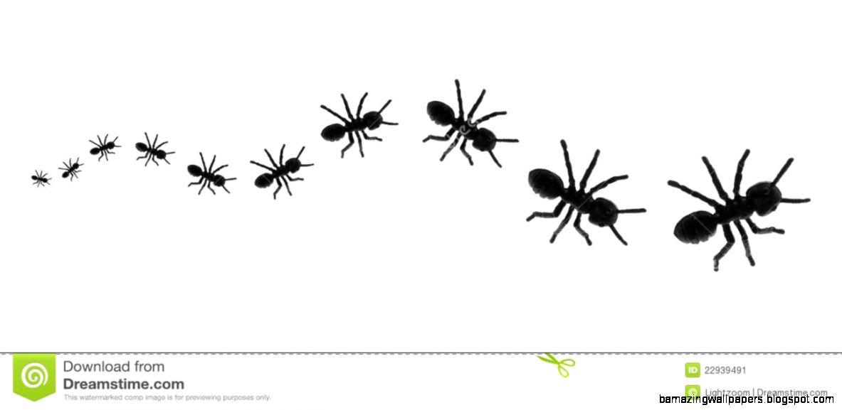 Ants Line Stock Photo   Image 39452700