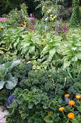 Garten war und ist wieder Trend (Bild aus der früheren Weihenstephaner Kleingartenanlage)