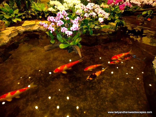 Gorgeous flowers and fish at Orchid Park