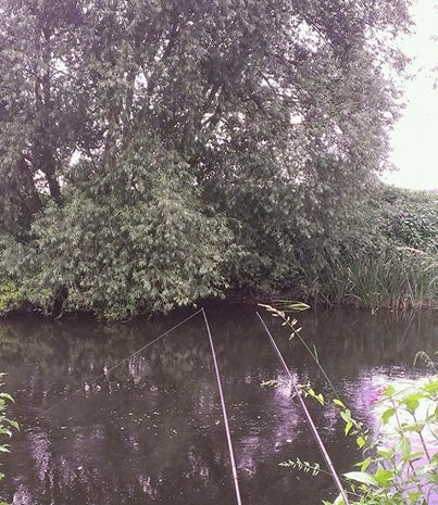 River Derwent barbel swims