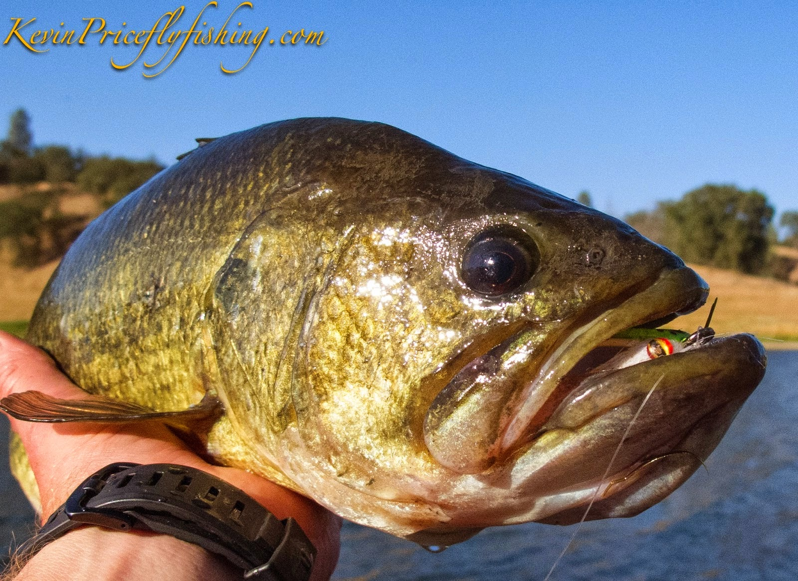 Bass Fishing on the Fly
