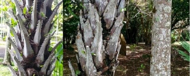 Mauritius - Botanical Garden