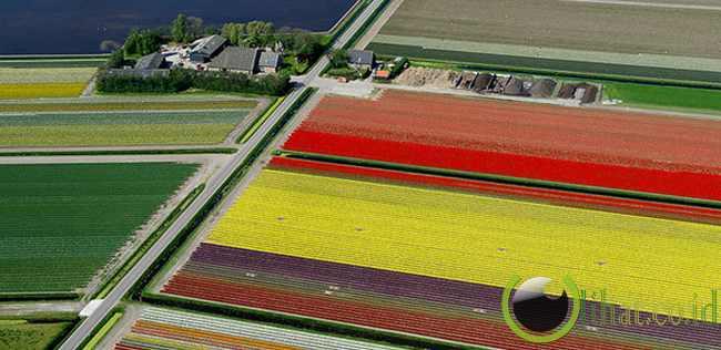 Ladang tulip, Belanda