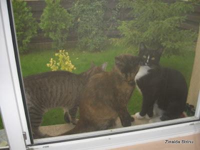 la-fereastra-cu-pisici-2
