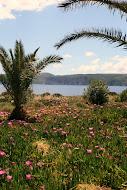 Lacedaemonian Vegetation