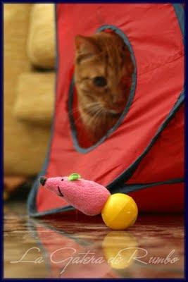 Elmo, vigilando al tentetieso