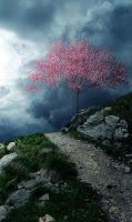 camino-al-fin-del-mundo-flor-de-durazno