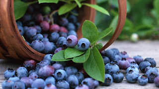 Fruits Blueberry Bilberry Basket HD Wallpaper