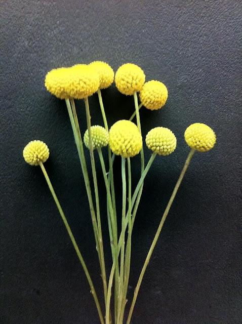 Craspedia Balls - Stein Your Florist Co.