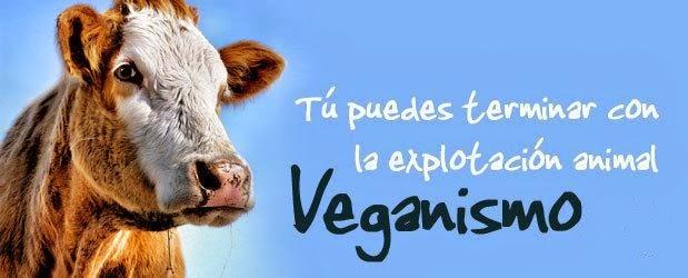 Derechos Animales: Enfoque Abolicionista