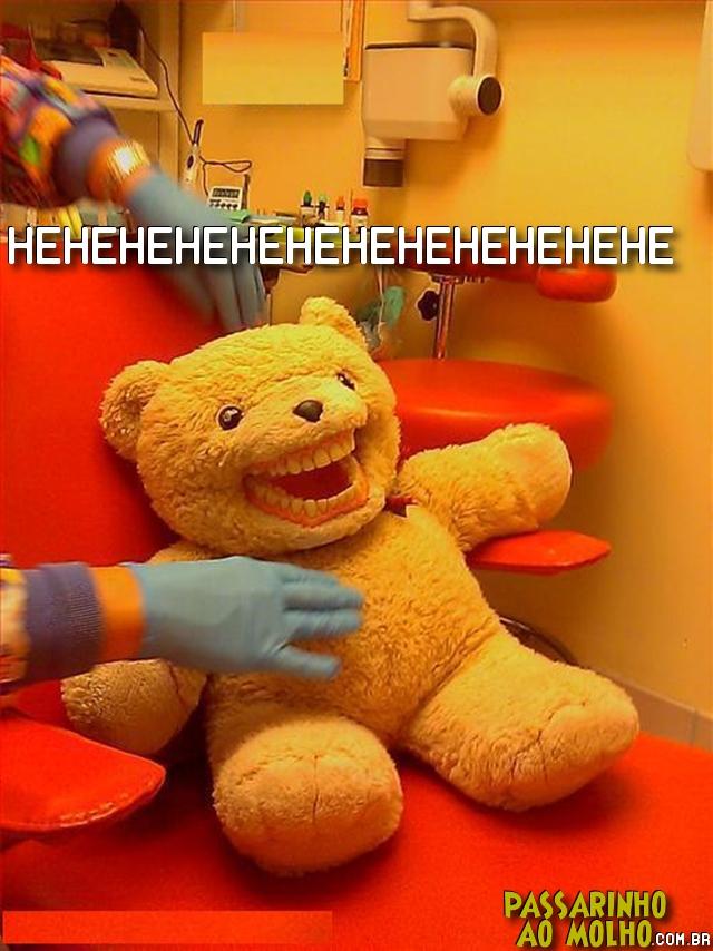 urso de dentarua, risos, sorrir