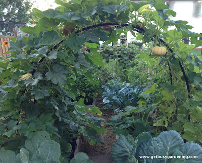 Squash arch with squash and pumpkins