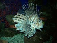 Fish in the Vancouver Aquarium