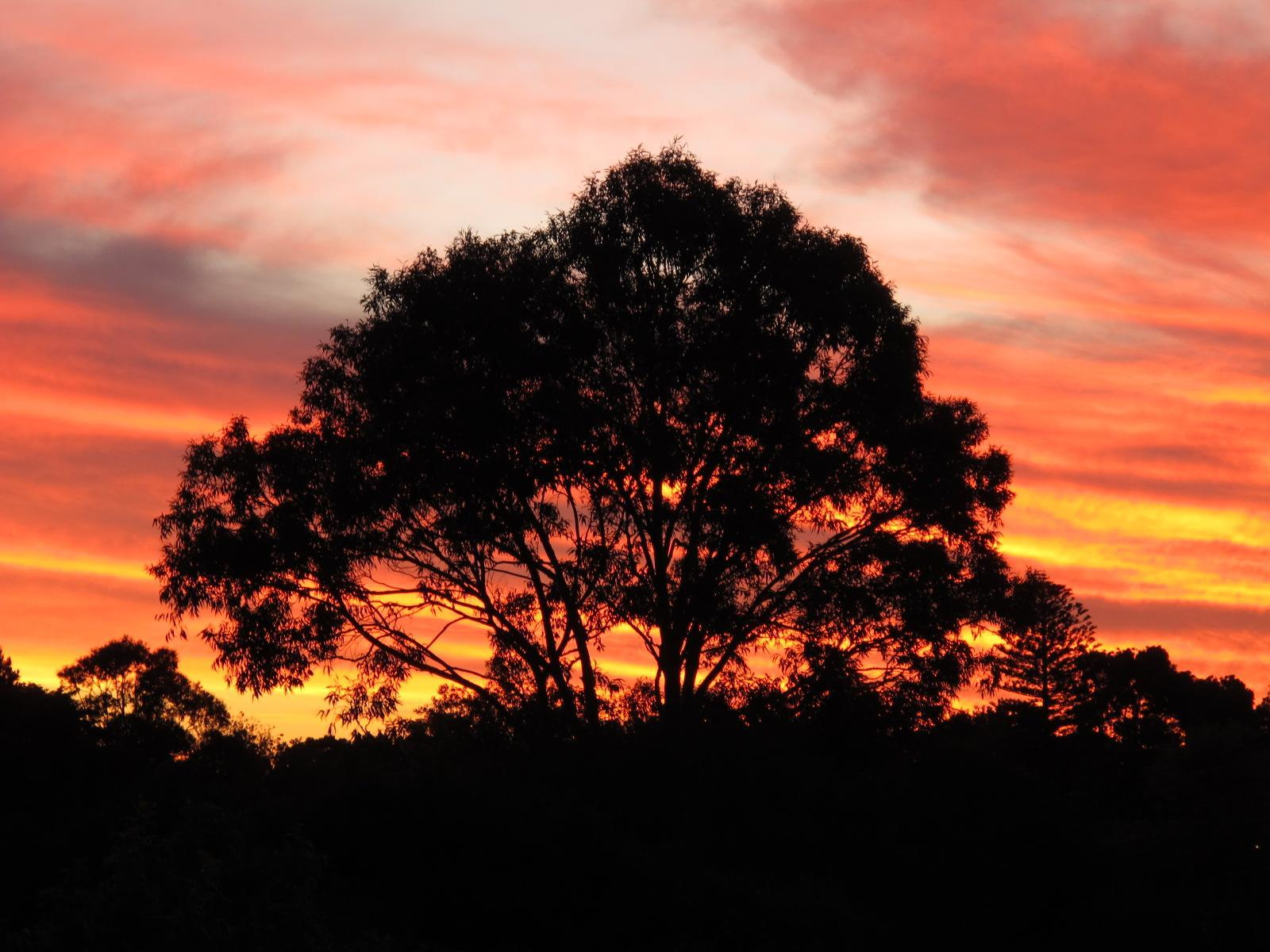 tree at sunset photo by susan wellington