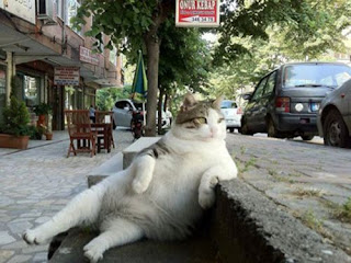 like a boss cat