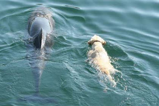 Donegal pals, a dog and a dolphin, featured on National Geographic documentary - VIDEO