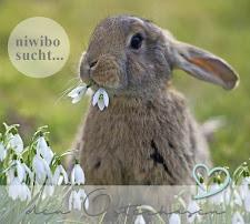 Niwibo sucht den Osterhasen
