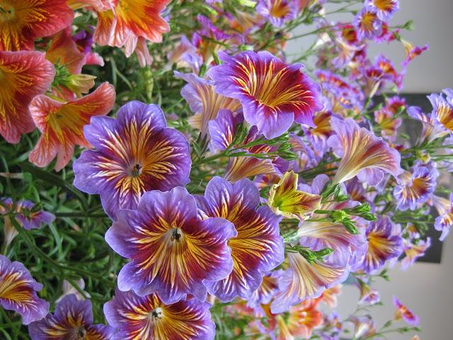 Hình ảnh hoa đẹp 06