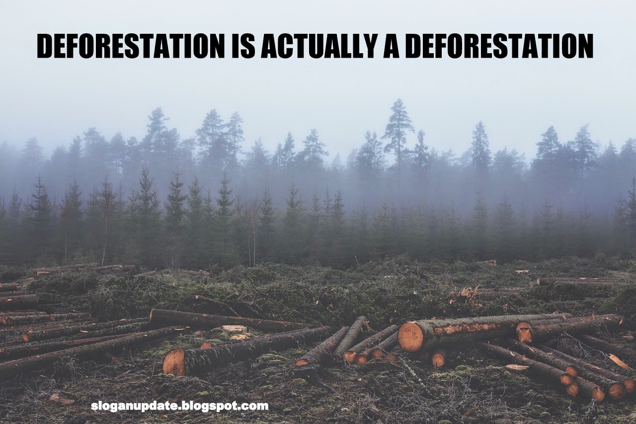 good slogan for deforestation
