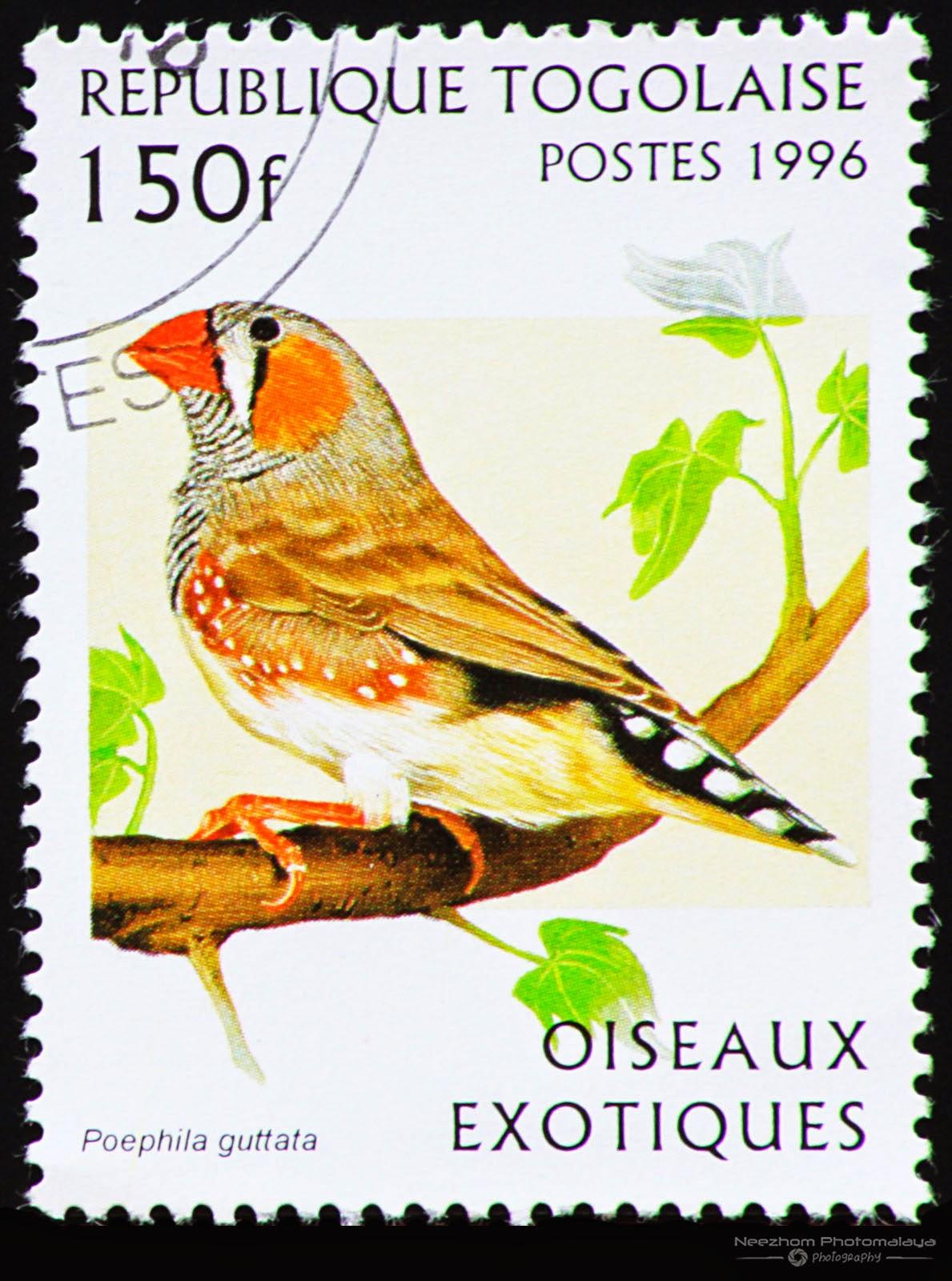 Togo 1996 Exotic Birds stamp - Zebra Finch (Poephila guttata) 150 f