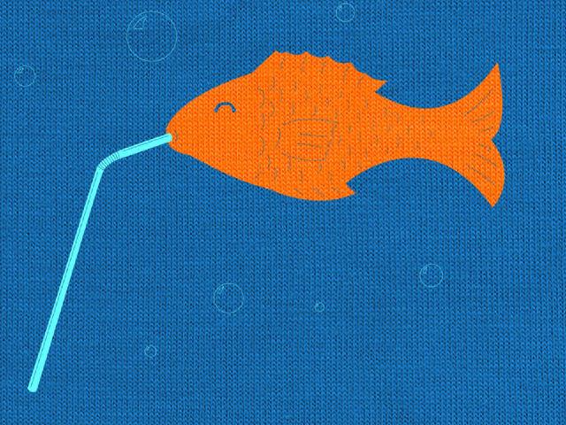 Info adakah ikan menjadi masin apabila minum air laut for Do fish drink water