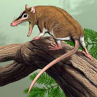 mamiferos del Cretáceo Sinodelphys