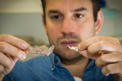 Arkeolog Canberra Menemukan Fosil Tikus Raksasa