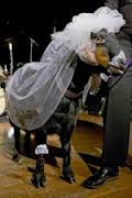 Bridal goat