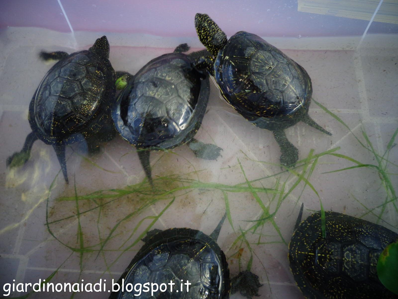 Il giardino delle naiadi laghetti in letargo for Laghetto tartarughe inverno