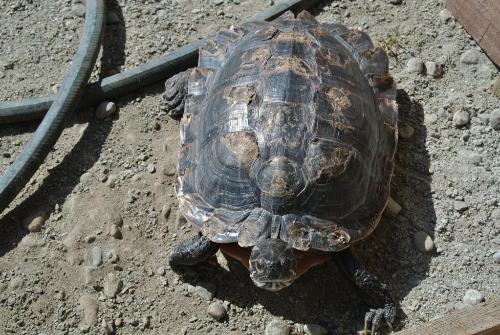 stormidae: turtles at home: part 1, Buddy and Yurdle