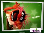 Animal -