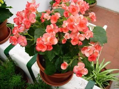 Los grupos de plantas blog tercer ciclo - Plantas pequenas de interior ...