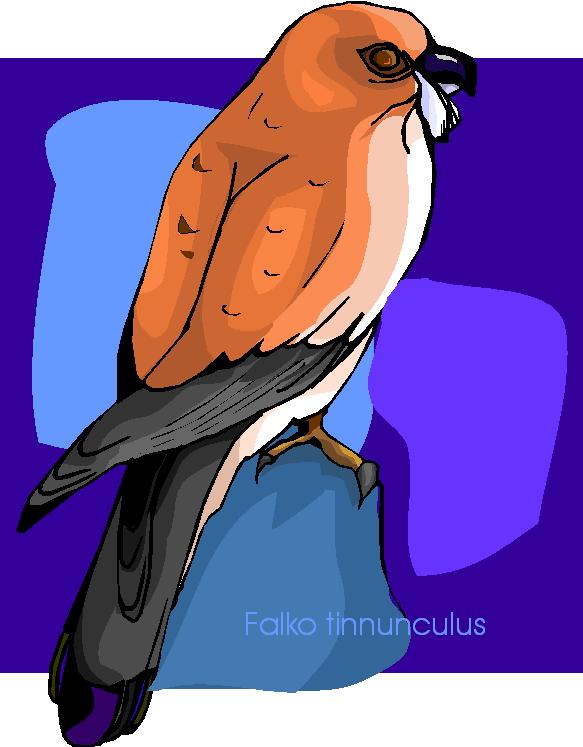 Falco Tinnunculus Free Clipart