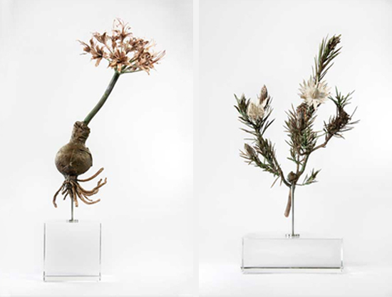 Safari Fusion blog | Botanical fossil sculptures | Botanical bronze castings by South African Nic Bladen