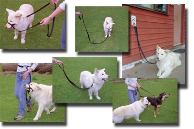 Quality dog training leads