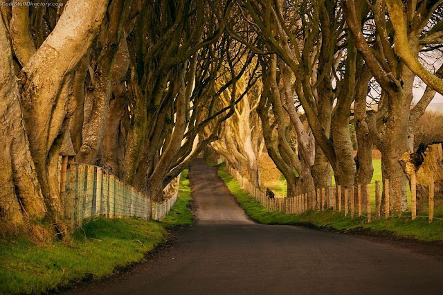 16. Dark Hedges by Vlad Metluks
