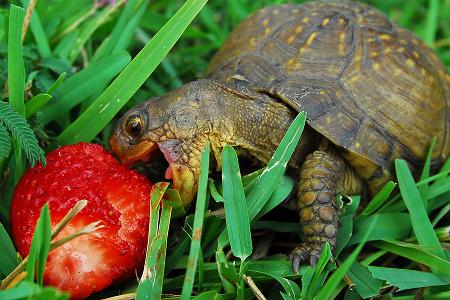 Mơ thấy con rùa bị sứt mai