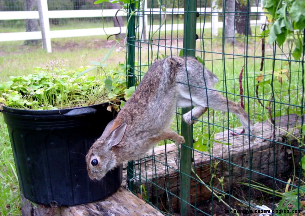 how to rabbit proof raised beds